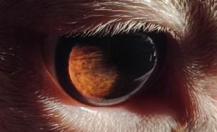 עיניים של חיות (צילום: אינסטגרם\mcr_photo)