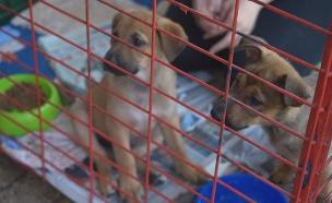 יום אימוץ כלבים (צילום: מתן חביליו, חדשות)