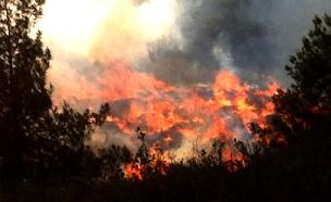 שריפה יער ירושלים (צילום: דניאל בן דוד, חדשות)