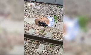 תיעוד החתול שנתקע במסילות (צילום: חדשות)