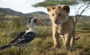 מלך האריות (צילום: יחסי ציבור)