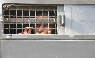 אסירי חמאס מעזה - לא זכאים לביקורים (צילום: מיכל פאתל / פלאש 90, חדשות)