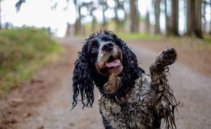 כלב מלוכלך  (צילום: kateafter | Shutterstock.com )