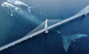 לווייתן ענק (צילום: פייסבוק\Serge Simard)