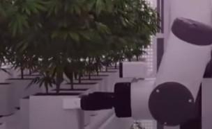 """הרובוט שמגדל שיחי קנאביס (צילום: מתוך """"next"""", קשת 12)"""