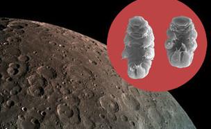 דובוני מים על הירח (צילום: צילום: בראשית | Willow Gabriel, Goldstein Lab)