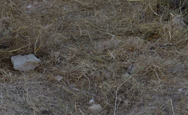 """המקום בו נמצאה גופתו של דביר שורק ז""""ל בגוש עציון (צילום: החדשות )"""