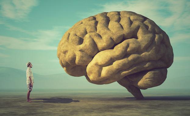 אילוסטרציה: מוח אנושי (צילום: Orla)