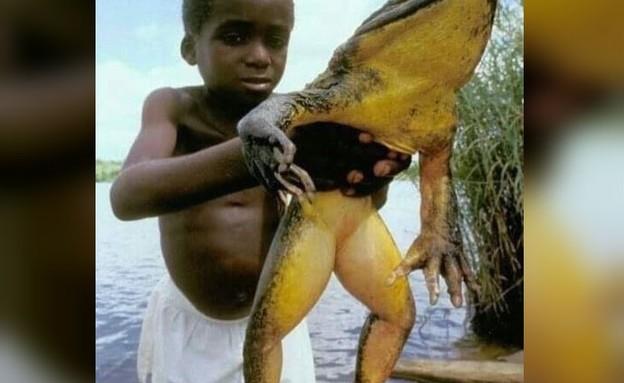 צפרדעת גוליית (צילום: charfaber, instagram)