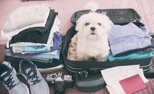 כלב בחופשה (צילום:  Monika Wisniewska, shutterstock)