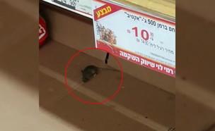 עכברים מכרסמים לחם בסניף רמי לוי בנתניה (צילום: החדשות , אלדד עובדיה)