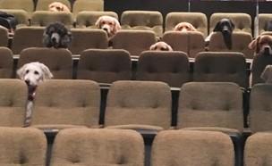כלבי שירות צופים במחזמר בילי אליוט  (צילום: פסטיבל סטרטפוד, cnn)