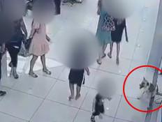 תיעוד: כלבה נגועה בכלבת תקפה ארבעה אנשים - ונלכדה