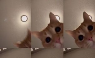 החתול ואפליקציה טיק טוק (צילום: צילום מסך)