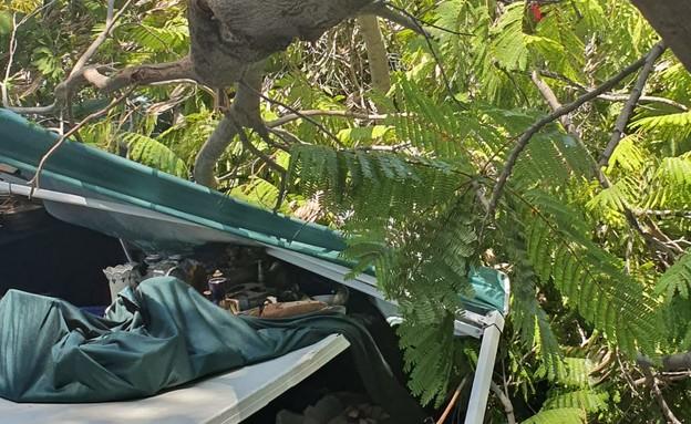 עץ נפל בבאר שבע (צילום: mako)
