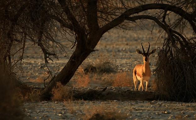 חיות (צילום: דני הדס)