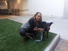 הכלבה הפצועה שאף אחד לא רצה מצאה בית בארה
