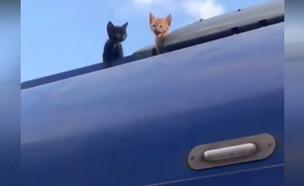 חתולים חולצו מגג הרכבת (צילום: באדיבות דוברות רכבת ישראל)