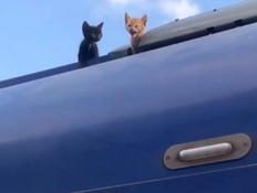 צפו: גורי החתולים שנסעו מהקריות לכרמיאל - ברכבת