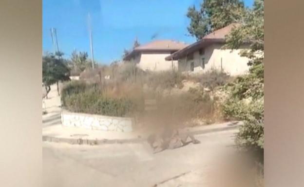 תקיפה אלימה באוטובוס (צילום: החדשות 12)