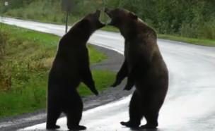 דובים (צילום: פייסבוק\Cari McGillivray)