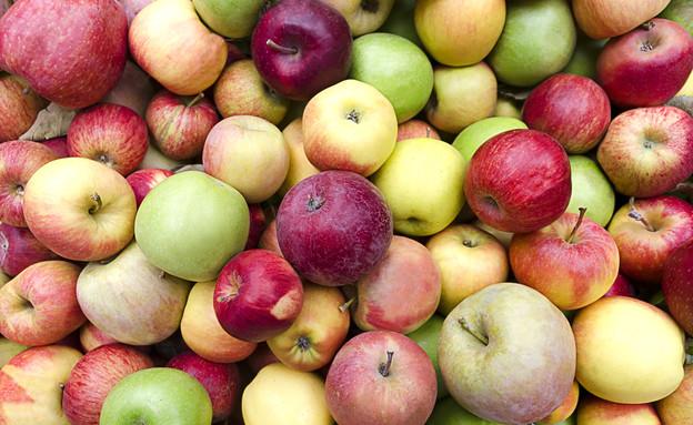 זני תפוחים (צילום: shutterstock, Nadezda Barkova)