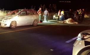זירת התאונה (צילום: איליה וינטר)