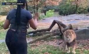האישה במתחם האריות בגן החיות