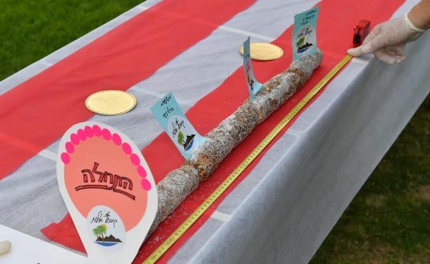 רולדת התמרים הארוכה בעולם- יטבתה (צילום: יוד צילומים)