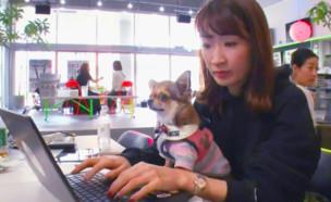 עובדים עם כלבים (צילום: enex)