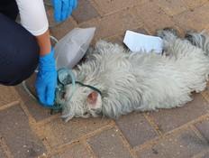 תיעוד: כוחות כיבוי הצילו כלב מבניין בוער