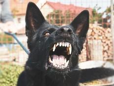 י-ם: הכלב תקף אישה - בעליו ישלמו 270 אלף שקל