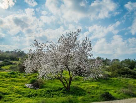 כל הטיולים והמסלולים לשבת אביבית