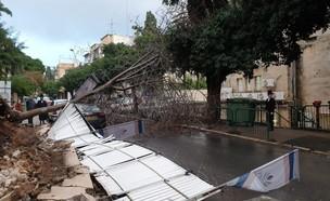 עץ שקרס בחיפה