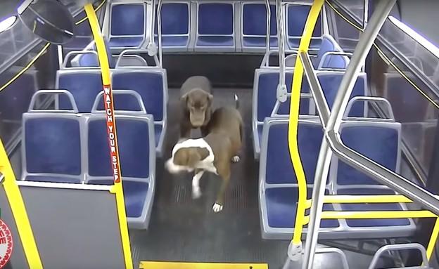 כלבים אבודים שהצילה נהגת אוטובוס במילווקי (צילום: RideMCTS)