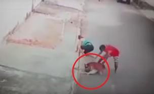 פיטבול תוקף ילד (צילום: youtube/Uriel Gámelo)