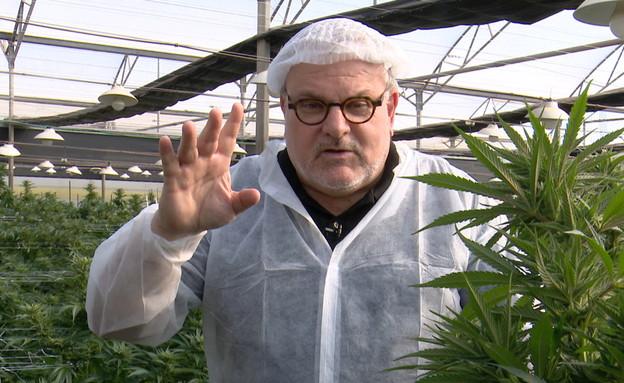 מנחם הורוביץ בחוות קנאביס (צילום: החדשות 12)