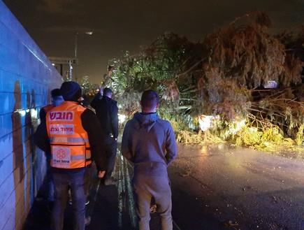 נשר: עץ קרס על רכב