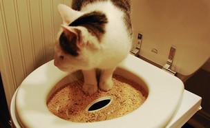 אסלה לחתולים (צילום: Eric Allix Rogers, flicker)