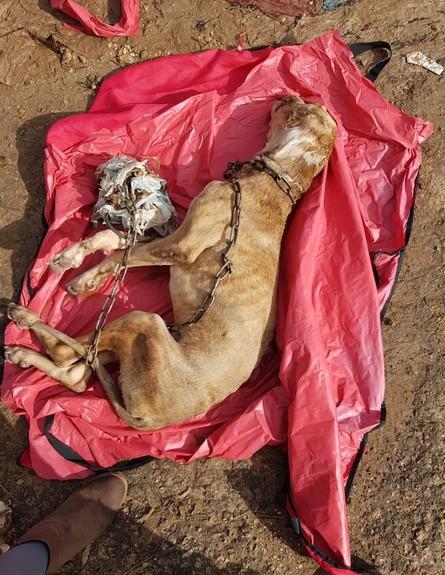 גופת הכלב אחרי שנמצא על ידי לוחמי האש