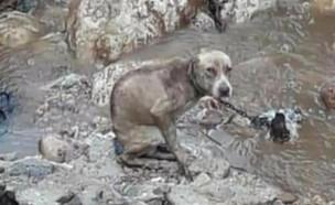 התמונה האחרונה של הכלב לפני שטבע