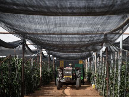 החקלאות במובלעת צופר, 2018 (צילום: הדס פרוש, פלאש 90)