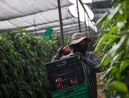 החקלאות במובלעת צופר שבערבה, 2018 (צילום: הדס פרוש, פלאש 90)