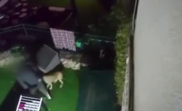 תיעוד בעלים מכה כלב (צילום: חדשות)