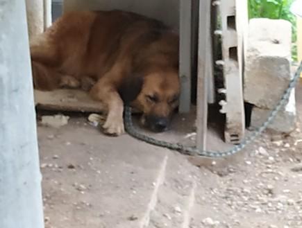 כלבים קשורים בחוץ בזמן מזג האוויר הסוער