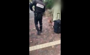 ההתעללות בכלב בחולון  (צילום: חדשות)