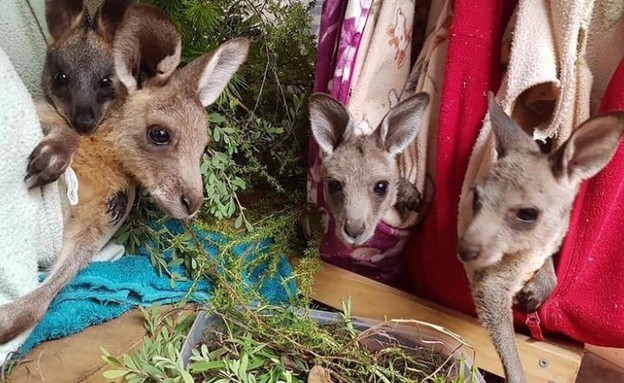 הכיסים הסרוגים - במיוחד עבור הקנגורואים (צילום: CNN)