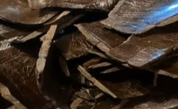 החשיש שנתפס (צילום: מתוך שידורי הטלוויזיה בהודו)