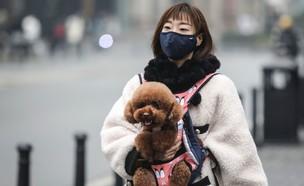 בעלי החיים בסין ננטשים וגוועים ברעב (צילום: skynews)