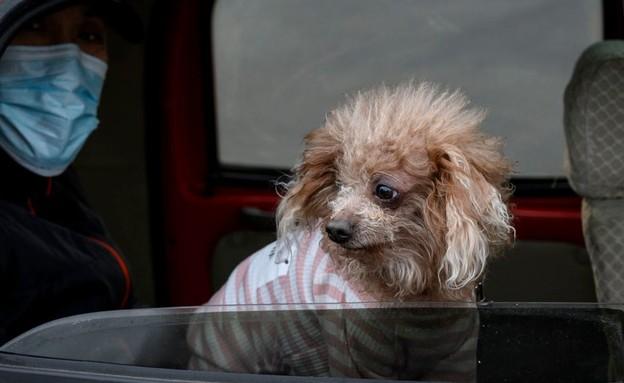 פעילים חוששים שאלפי כלבים נתונים בסכנת מוות